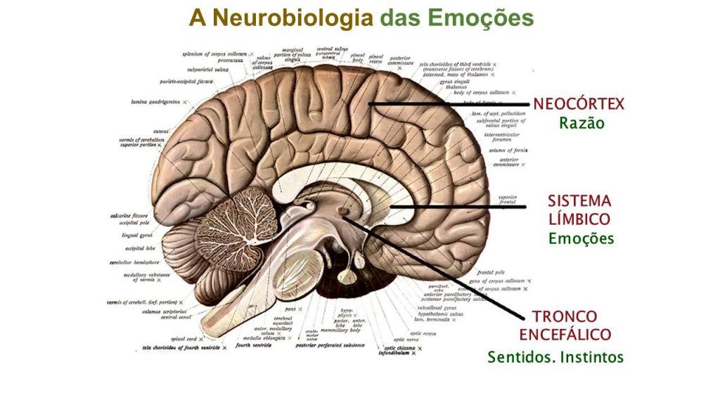 A Neurobiologia das Emoções